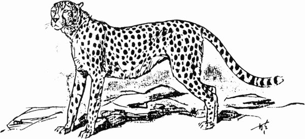tegninger af katte for børn